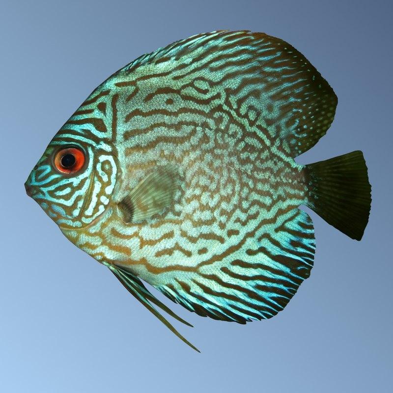3d discus fish model