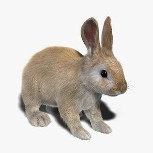 rabbit cream fur 3d obj