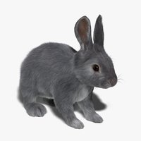 Rabbit (Grey) (FUR)