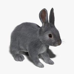 3d model rabbit grey fur