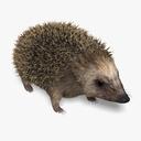 hedgehog 3D models