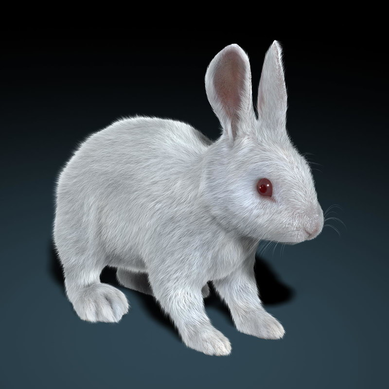 obj rabbit white fur