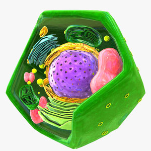 3d vegetal cell model