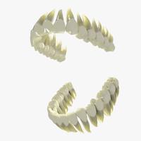 3d human teeth