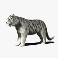 3d model of white tiger