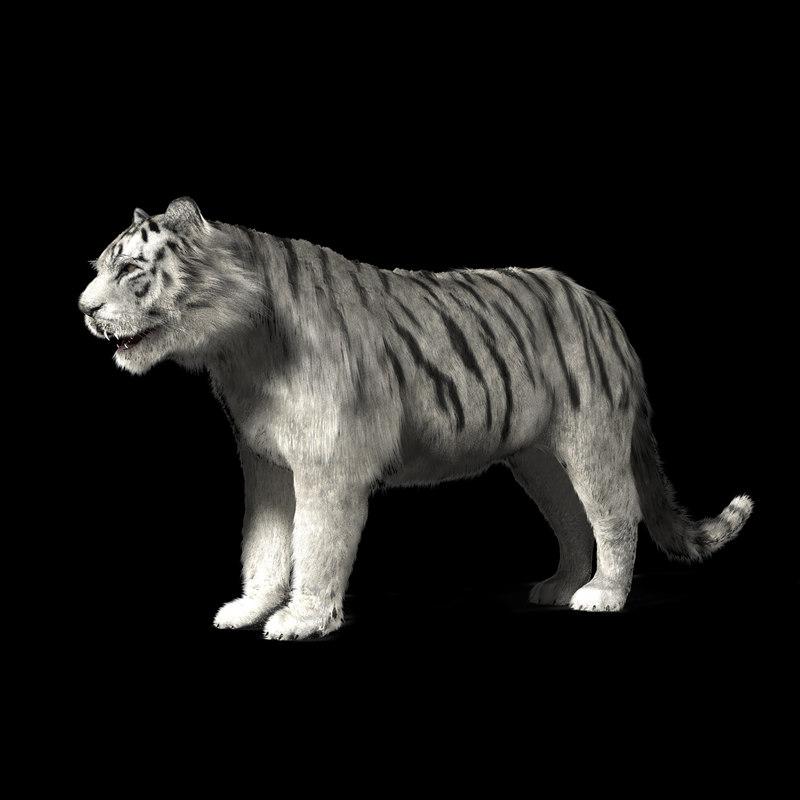 3d model of white tiger
