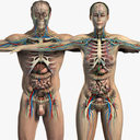 Male and Female Anatomy Essentials Pack (Textured)