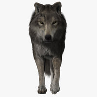 wolf fur animations 2 3d model