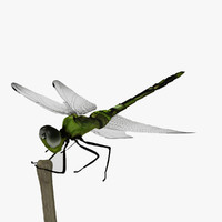 max dragonfly animation insect