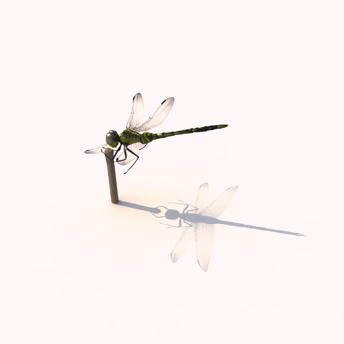 dragonfly animation insect