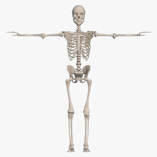 bone skeletal max