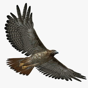 3d model hawk rigged animator