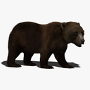 brown bear 3D models