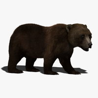 Brown Bear (RIGGED) (FUR)