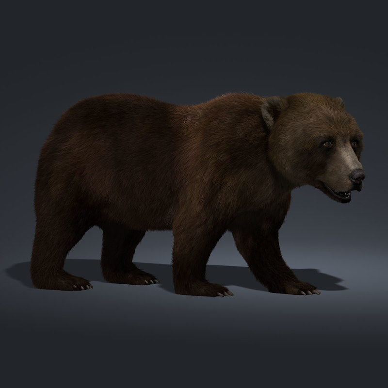 brown bear rigged fur ma