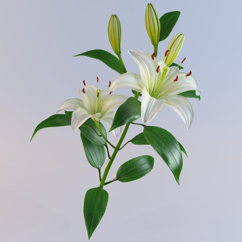 3d lily petal leaf