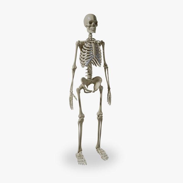 3d obj human skeleton