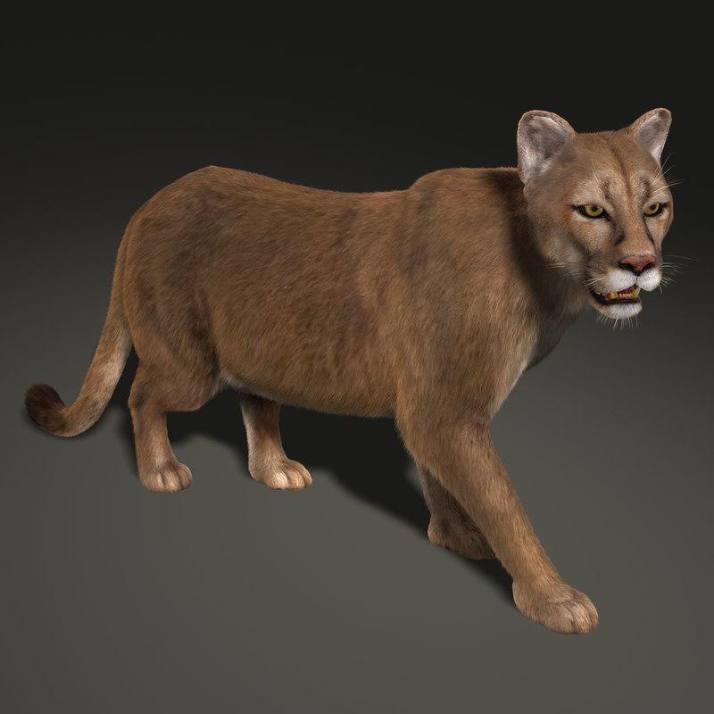 maya cougar rigged fur
