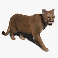 Cougar (RIGGED) (FUR)