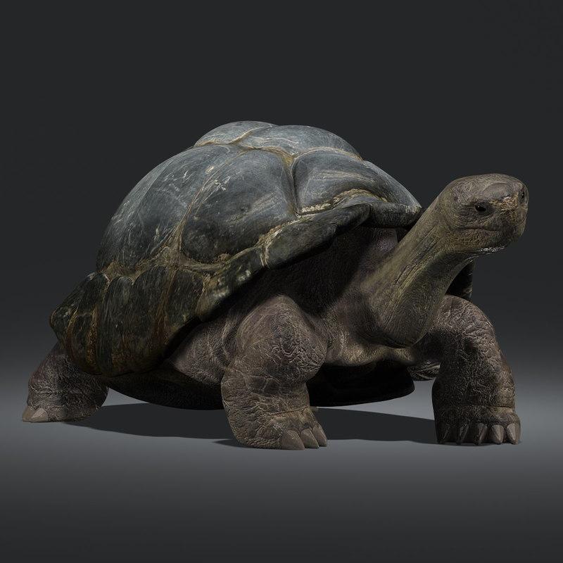 galapagos tortoise rigged ma