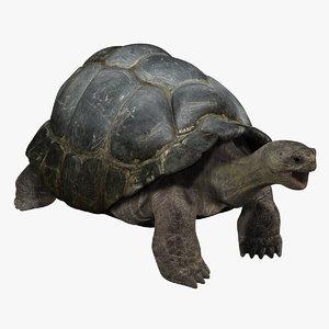 3dsmax galapagos tortoise