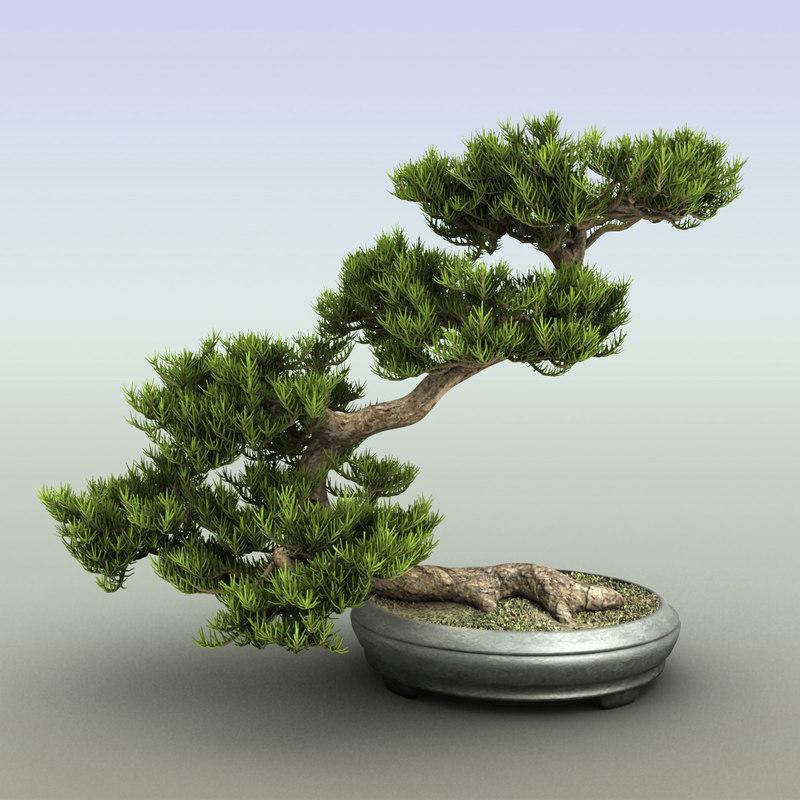 bonsai tree c4d