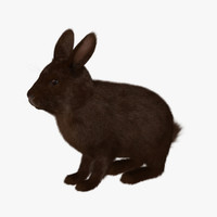 brown rabbit 3d model