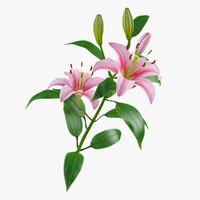 3d lily petal leaf model