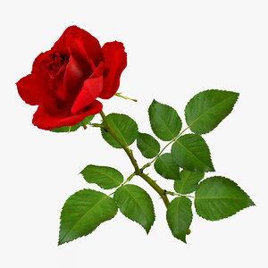 max rose modeled