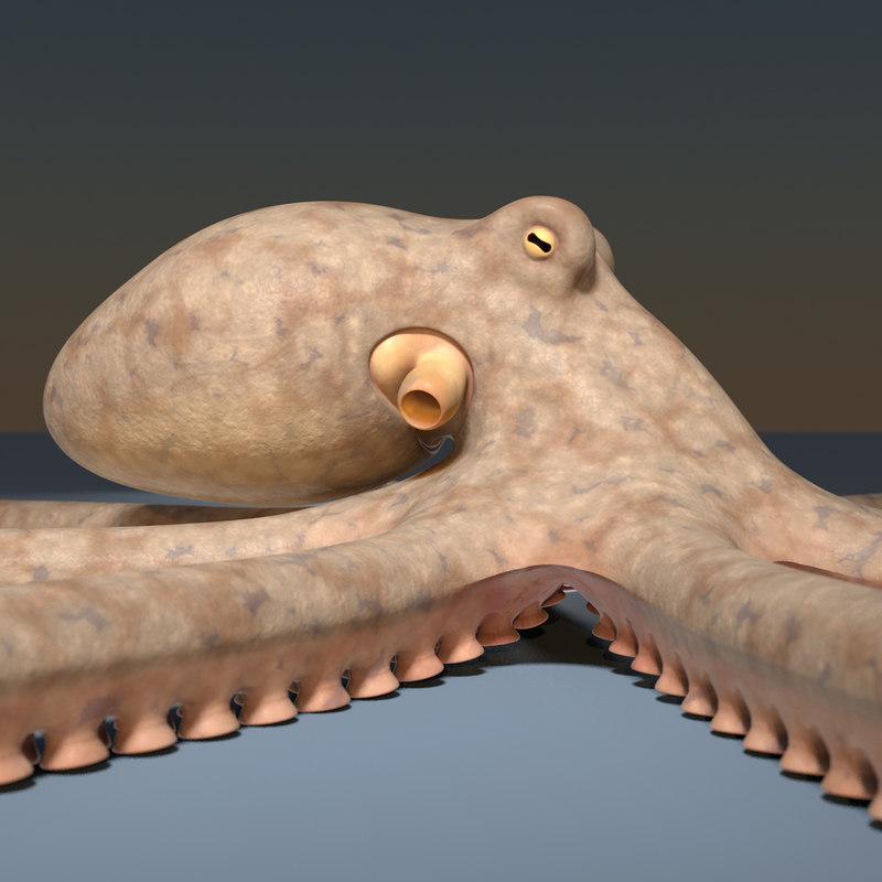 octopus beak 3d model