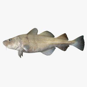 cod fish 3d model