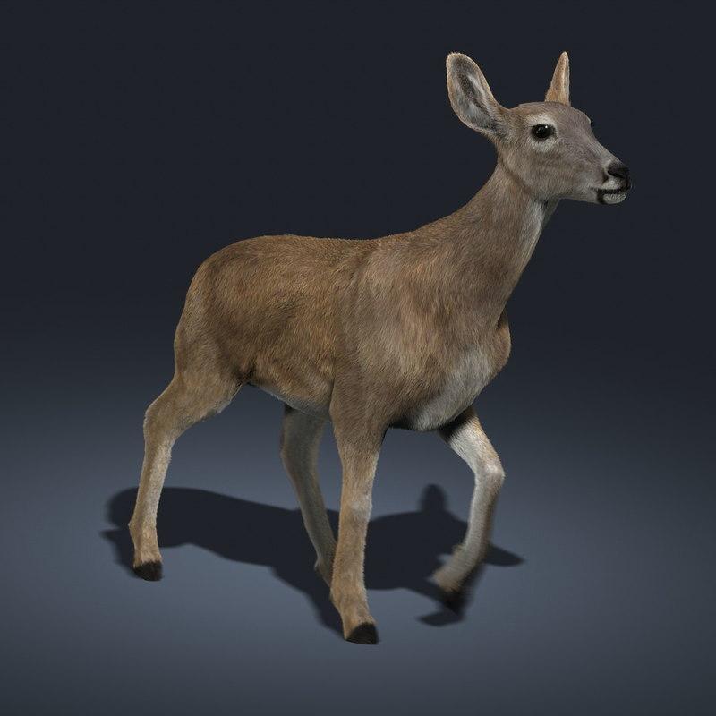 doe deer fur animation ma