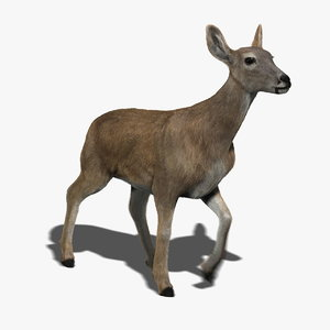 doe deer fur animation ma