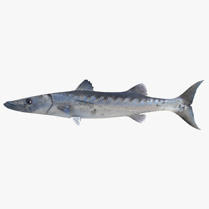 3ds barracuda fish