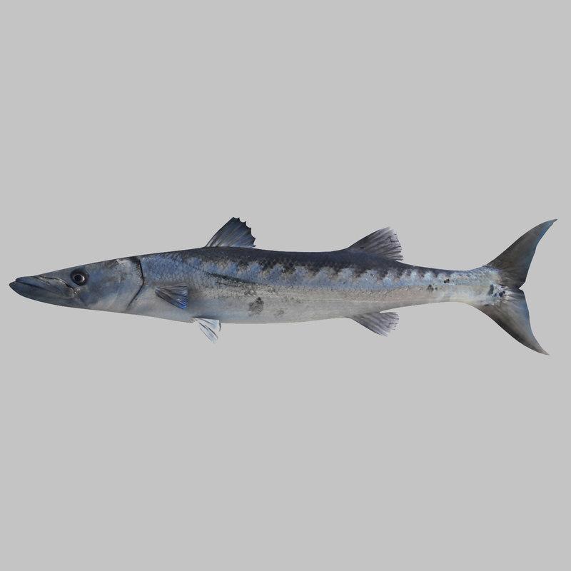 3ds barracuda fish