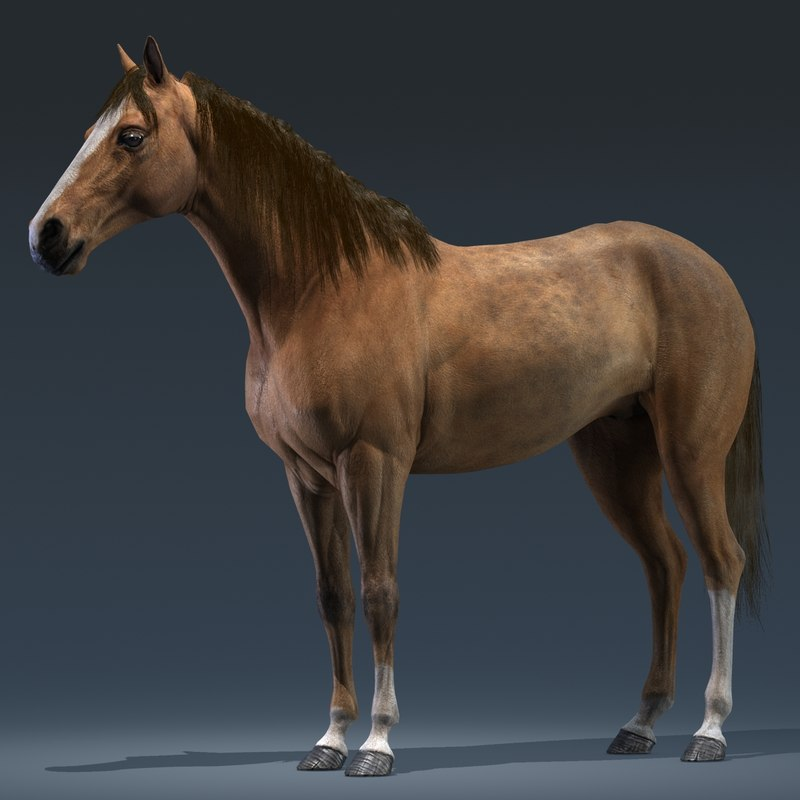 Horse By Furok 3d Model Realistic Horse