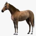 Stallion 3D models
