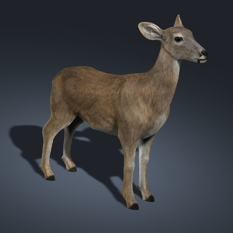 3d doe deer fur model