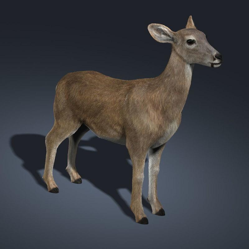 3d doe deer fur model