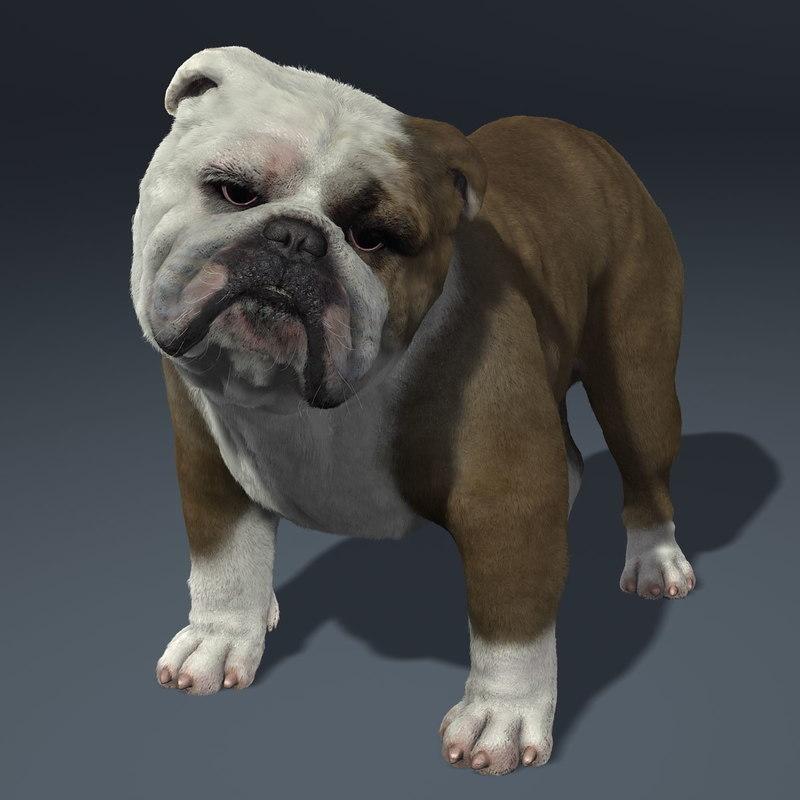 maya bulldog dog
