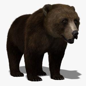 brown bear fur 3d model