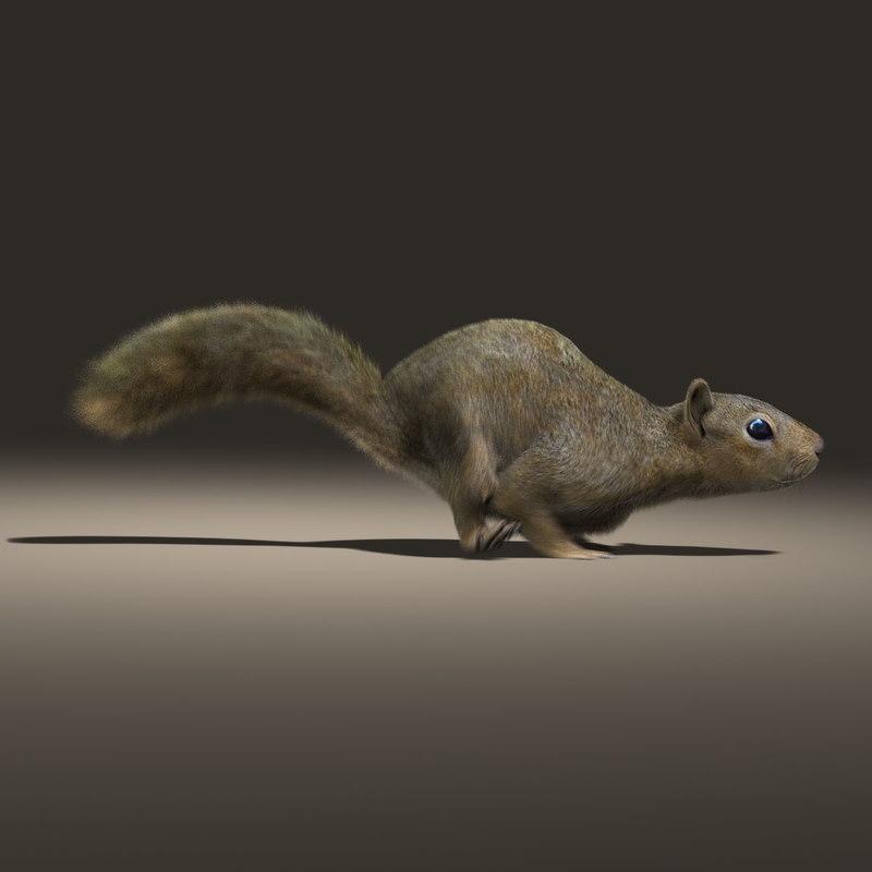 squirrel fur animation 3d model