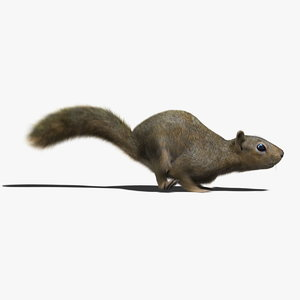 squirrel fur animation 3d model