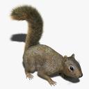rodent 3D models