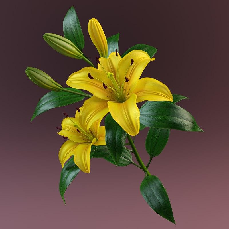 3d model of lily petal leaf