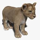 lion cub 3D models