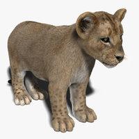 lion cub fur 3d model