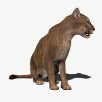 Cougar (ANIMATED) (FUR)