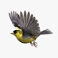 lwo goldfinch rigged animation