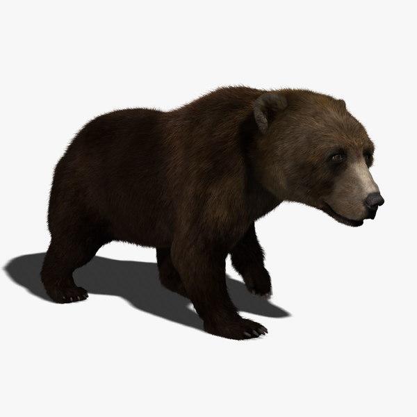 brown bear fur animation 3d ma